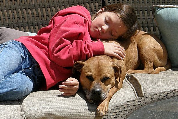 Child with Pitbull