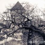 Tallinn, Estonia-tree-band-080