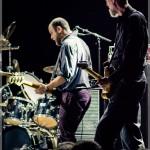 Swans-band-031